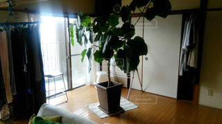 植物 - No.670618