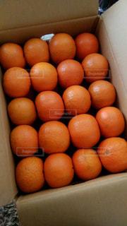 オレンジの写真・画像素材[670629]