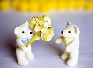 花束の写真・画像素材[670779]