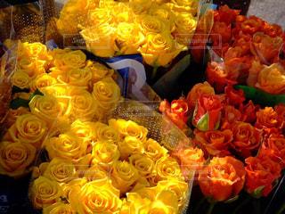 花の写真・画像素材[670801]