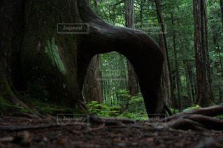 森林 - No.666981