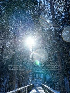 森、雪、光の写真・画像素材[1020695]
