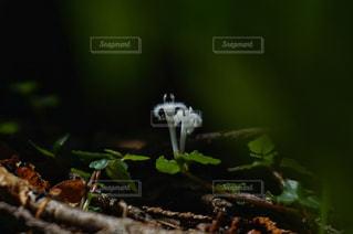 近くの花のアップの写真・画像素材[1294167]