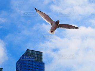 鳥の写真・画像素材[669076]
