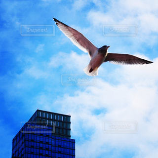 鳥の写真・画像素材[669081]