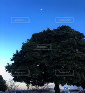 自然の写真・画像素材[669286]