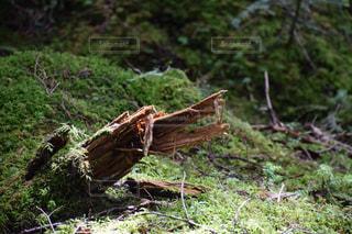 自然の写真・画像素材[692908]