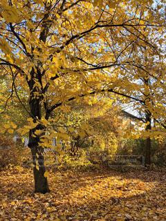 ヴュルツブルクの紅葉の写真・画像素材[1629871]