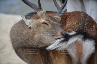 近くに動物のアップの写真・画像素材[1629972]
