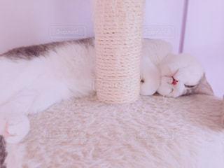 ベッドの上で横になっている猫の写真・画像素材[1373699]