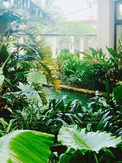 中庭の緑の植物の写真・画像素材[1410901]