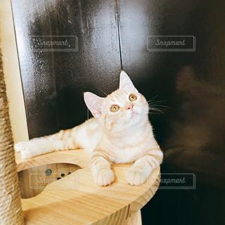 木製テーブルの上に座っている猫の写真・画像素材[1565795]