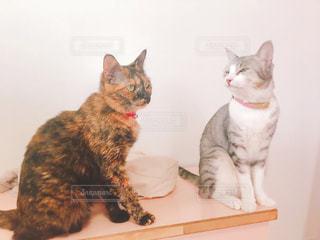エモい表情の猫2の写真・画像素材[1579418]