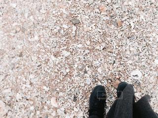 秋、海岸の写真・画像素材[1580246]