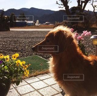 犬の写真・画像素材[11461]