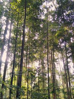 マレーシアの森林の写真・画像素材[1038444]