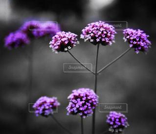 花の写真・画像素材[667926]