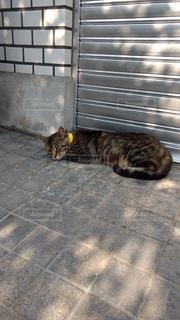 猫 - No.668387