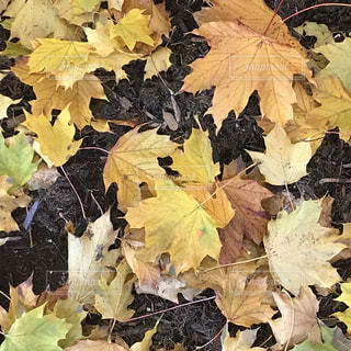 近くの植物のアップの写真・画像素材[1596614]