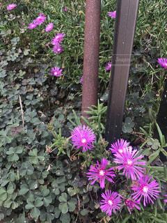 花の写真・画像素材[677980]