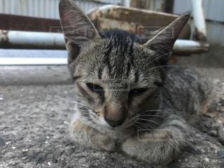 猫の写真・画像素材[681339]