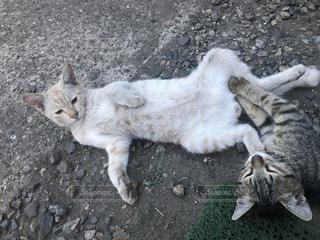 猫の写真・画像素材[681341]