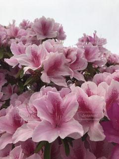 近くの花のアップの写真・画像素材[1506129]