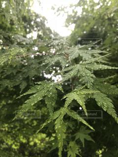 森の中の緑の植物の写真・画像素材[1506130]