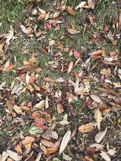 秋を告げる枯葉の写真・画像素材[1660581]
