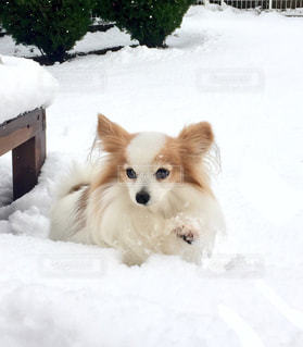 No.669522 犬