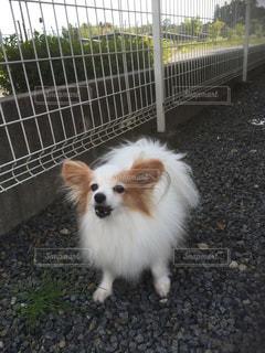 犬の写真・画像素材[672238]