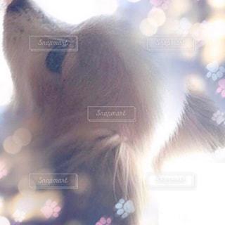 犬の写真・画像素材[673958]