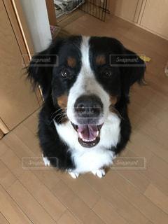 タイル張りの床の上に座って犬の写真・画像素材[729937]