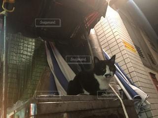 猫の写真・画像素材[669613]
