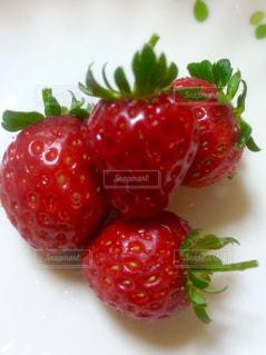 収穫 イチゴ 苺 家庭菜園の写真・画像素材[671147]