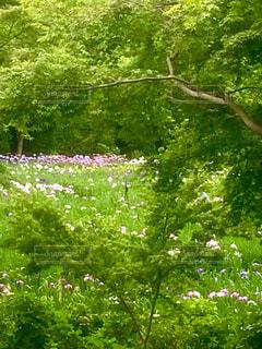 花の風景 花 自然 初夏の写真・画像素材[673945]