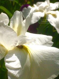 ハチ 昆虫 花 春の写真・画像素材[673947]