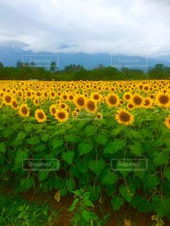 自然の写真・画像素材[673953]