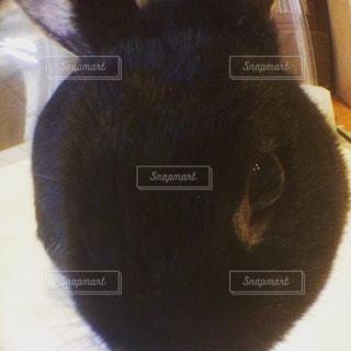 カメラを見ている猫の写真・画像素材[705483]