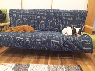 ベッドの上で横になっているペット達の写真・画像素材[778349]
