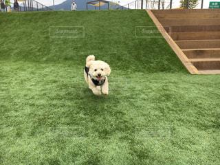 犬の写真・画像素材[481017]