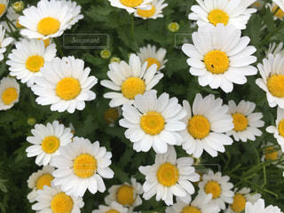 花の写真・画像素材[481018]