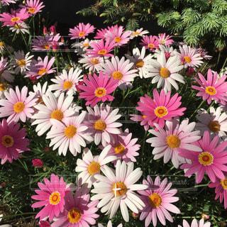 花の写真・画像素材[481021]