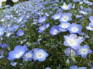 花の写真・画像素材[481024]
