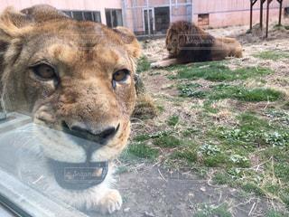 動物園の写真・画像素材[481132]