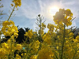 花の写真・画像素材[481133]