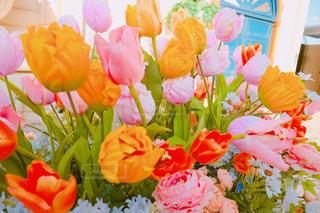 花の写真・画像素材[481134]