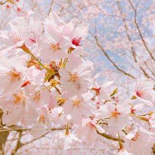 花の写真・画像素材[481136]