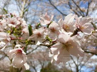 花の写真・画像素材[481137]