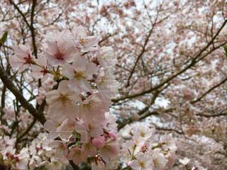 花の写真・画像素材[481484]